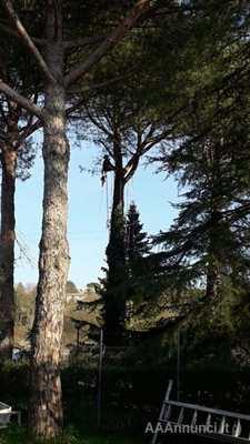 Arboricoltore, potatura, giardinaggio, cura del verde