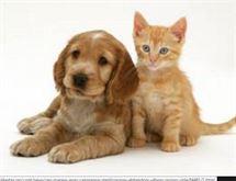 DOG - CAT SITTER assistenza animali
